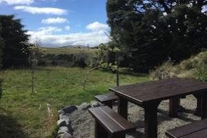 The Beeches garden